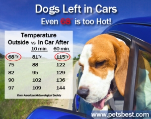 dogs_in_cars_Heat_Risks_Final