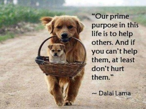 Dog-Quotes-60