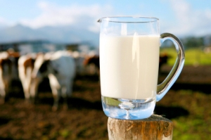 milkcows-istock000003721058-1